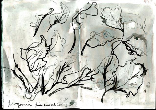 Botanics2-a